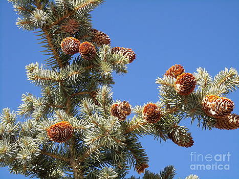 Pinecones for Christmas by Donna Parlow