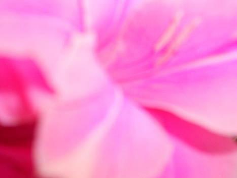 Pink by Alexandra Masson