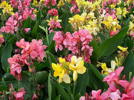 Pink and Yellow Flowers by Valerie Longo