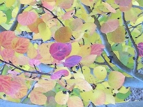 Pink Aspen Leaves by Bill Kennedy