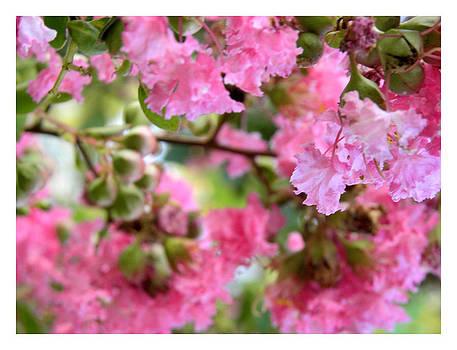 Nada Meeks - Pink Blooms