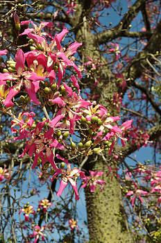 Pink blossom tree by Slavi Begov