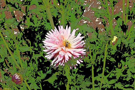 Gilbert Artiaga - Pink Chrysanthemum