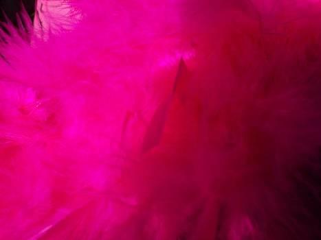 Greg Geraci - Pink Feathers