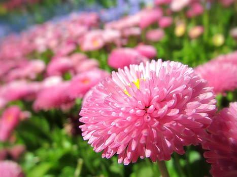Pink Fields Forever by Eva Kondzialkiewicz