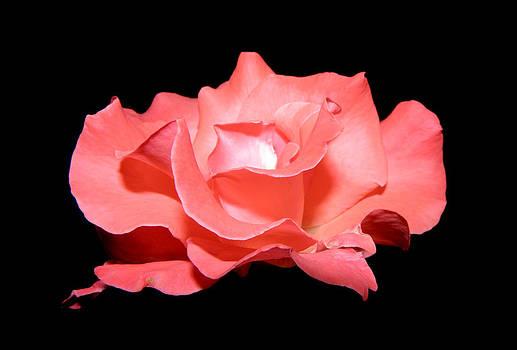 Pink Floater  by Kim Galluzzo Wozniak