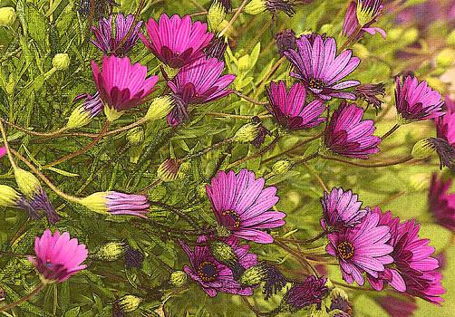 James Steele - Pink Flower Art
