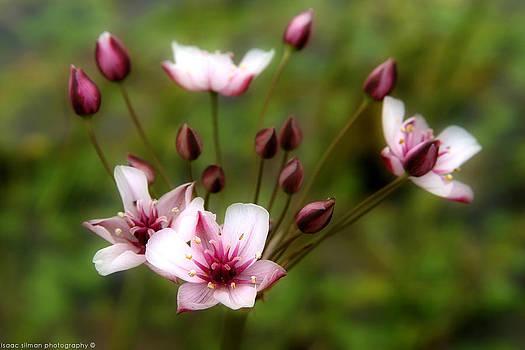 Isaac Silman - pink flower