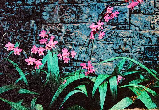 Pink Flowers Gray Wall by Bob Whitt