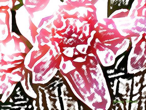 James Temple - Pink Ginger