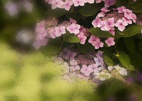 Diana Cox - Pink Lacecaps