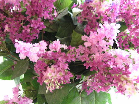 Pink Lilacs by Peggy Mars