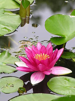 Pink Lily Flower  by Diane Greco-Lesser