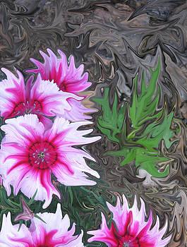 Pink Passion by Linda Bylsma