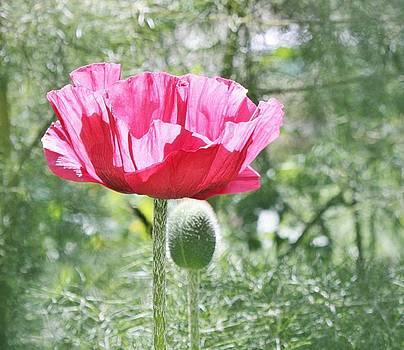 Pink Poppy by Cathie Tyler