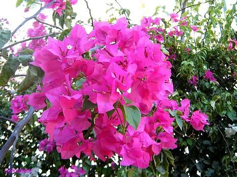 Pink Rose by Essam Ramadan