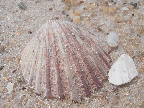 Kimberly Perry - Pink Scallop Shell