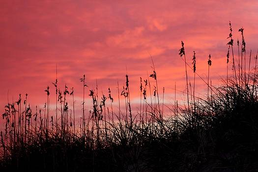 Pink skys above the dunes by Kim Galluzzo Wozniak