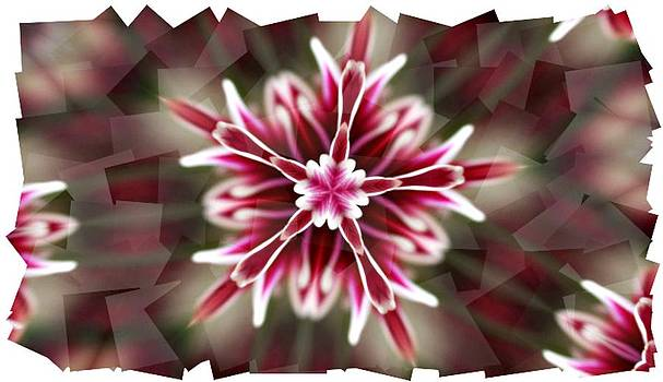 Pink Snowflake  by Cathie Tyler