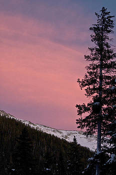 Pink Sunset by Lisa  Spencer