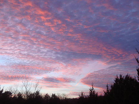 Pink Sunset by Tonia Darling