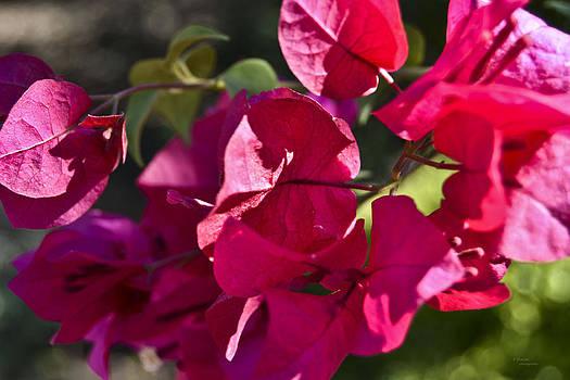 Pink by Teresa Dixon