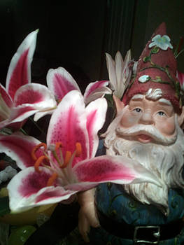 Pink Tiger Lily Gnome by Karl Reid