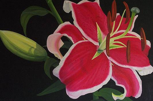 Pink Tiger lily by Pera  Schillings