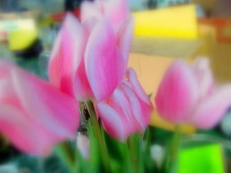 Pink Tulips by Amy Bradley