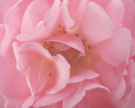 Pinky Mae by Robin Blankenship