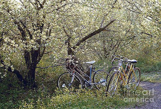 Spring/ Pinnicle Hill by Joseph   Geswaldo