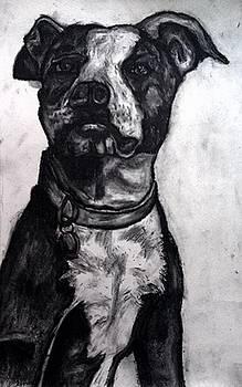 Andrew Hench - Pit Bull