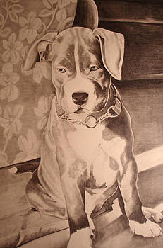 Pitty Pet Portrait by Yvonne Scott