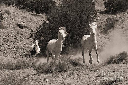 Placitas Mustangs by Lori Bristow