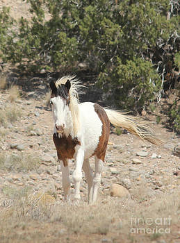 Plactias Mustang by Lori Bristow