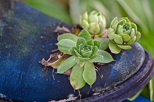Plant boot by Cheryl Cencich