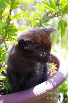 Tannis  Baldwin - Planted Kitten