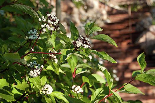 James Woody - Plants Beside Beaver Creek Villa