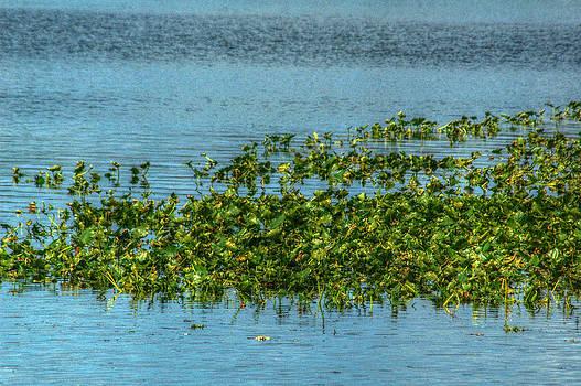 Ronald T Williams - Plants On Swanee