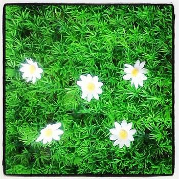 Plastic daisy flowers by Nawarat Namphon
