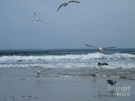 Playful Gulls by Laurence Oliver