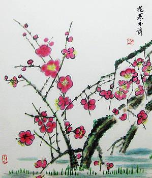 Plum flower by Jason Zhang