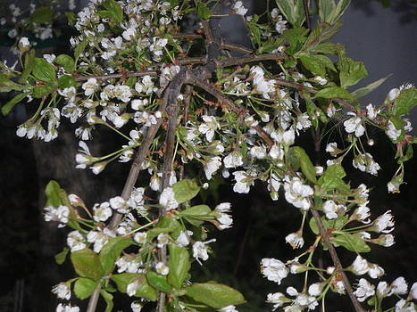 Plum Flowers by Mary Elson