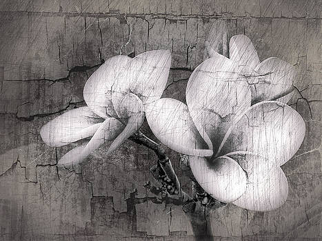 James Steele - Plumiera in Black and White