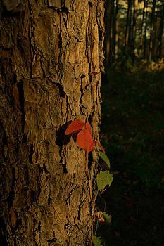 Nina Fosdick - poison ivy