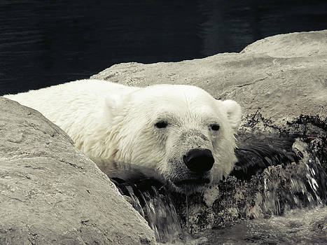 Polar Relaxation by Charles Benavidez