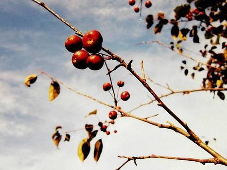 Pomme Sauvage by Natalie Gibbs