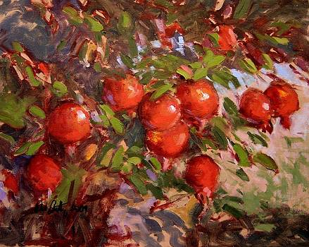 Poms on the tree by R W Goetting