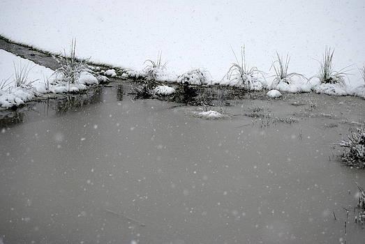 Rachael Shaw - Pond