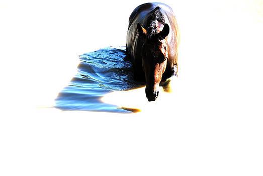 Pony Fun by Kelly Kitchens